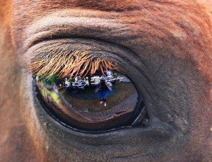 Selfie in the eye of a horse (by Pandora's Perspective on Flickr)