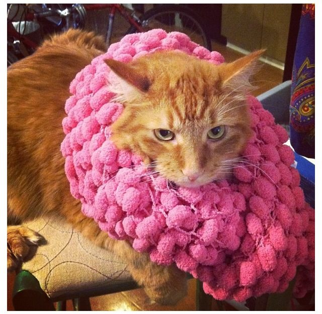 Kitty gets yarn bombed! Mreow. LOL. Hyperallergic loves cats.